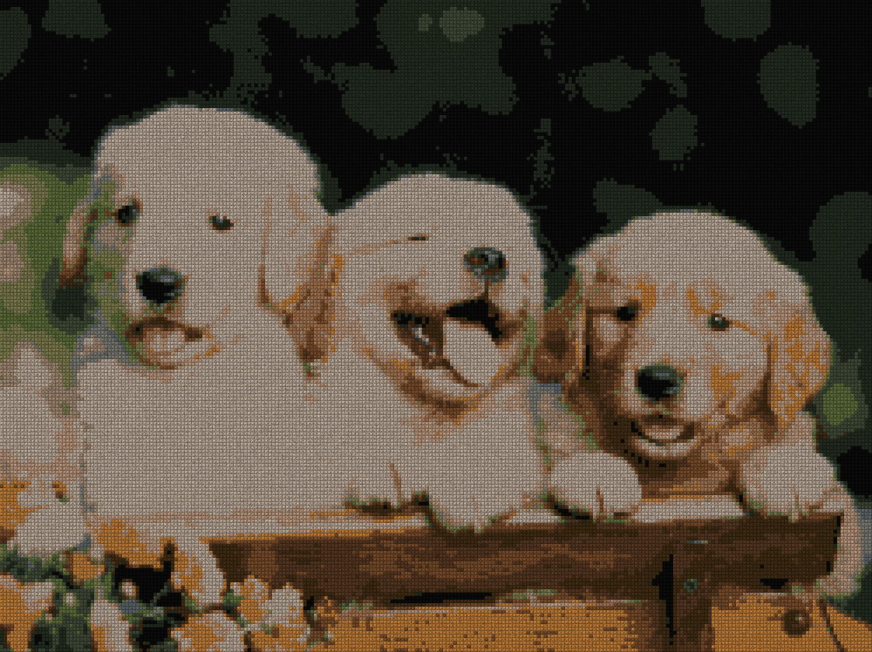 schemi_misti/animali_terra/Golden_Retrievers.jpg