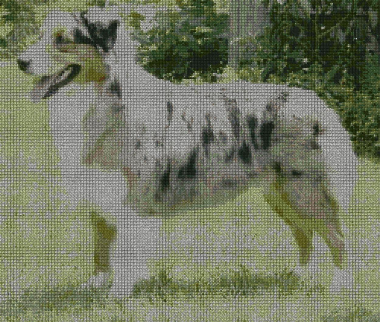 schemi_misti/animali_terra/cane_pastore_australianos.jpg