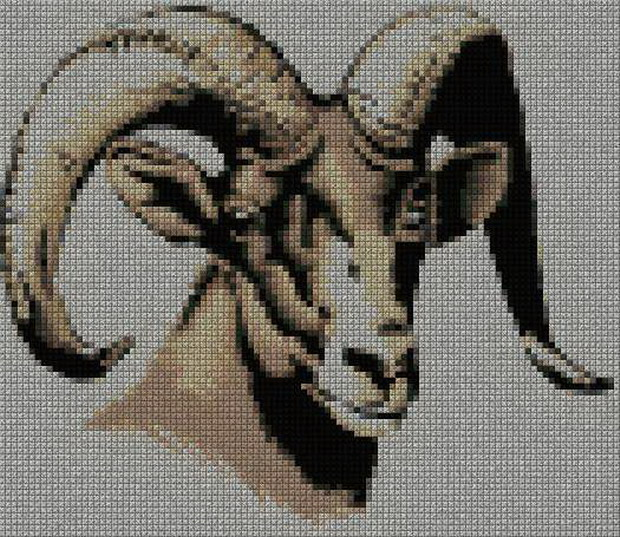 schemi_misti/animali_terra/schemi_animali_159.JPG
