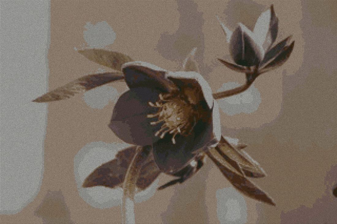 schemi_misti/fiori/fiore1_320x213.jpg
