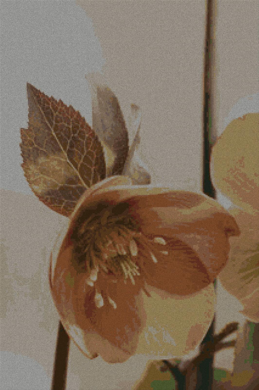 schemi_misti/fiori/fiore2_213x320.jpg