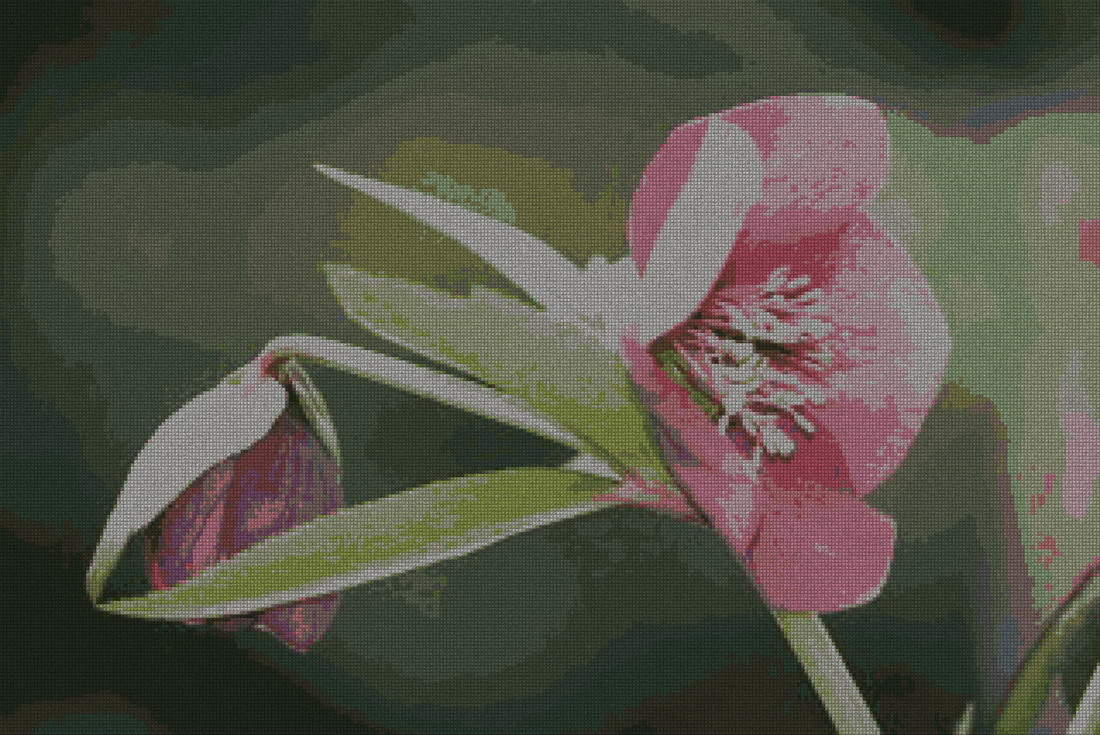 schemi_misti/fiori/fiore3_320x214.jpg