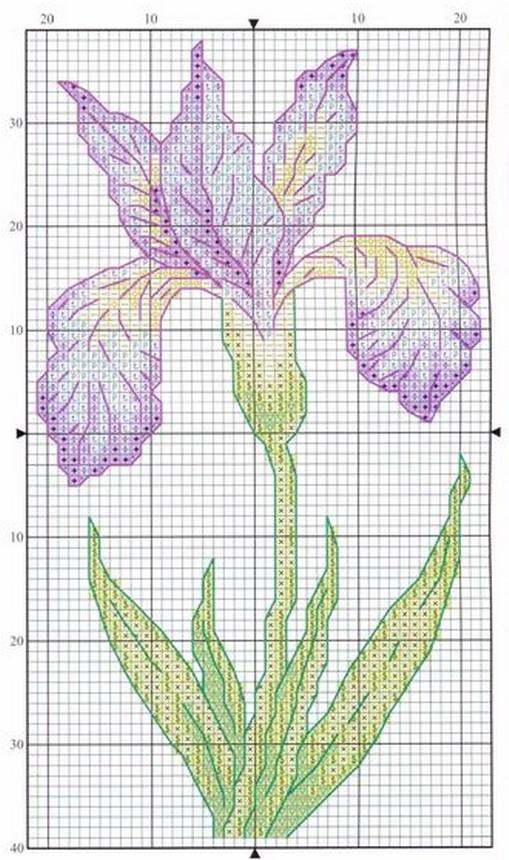 schemi_misti/fiori/iris_4.jpg