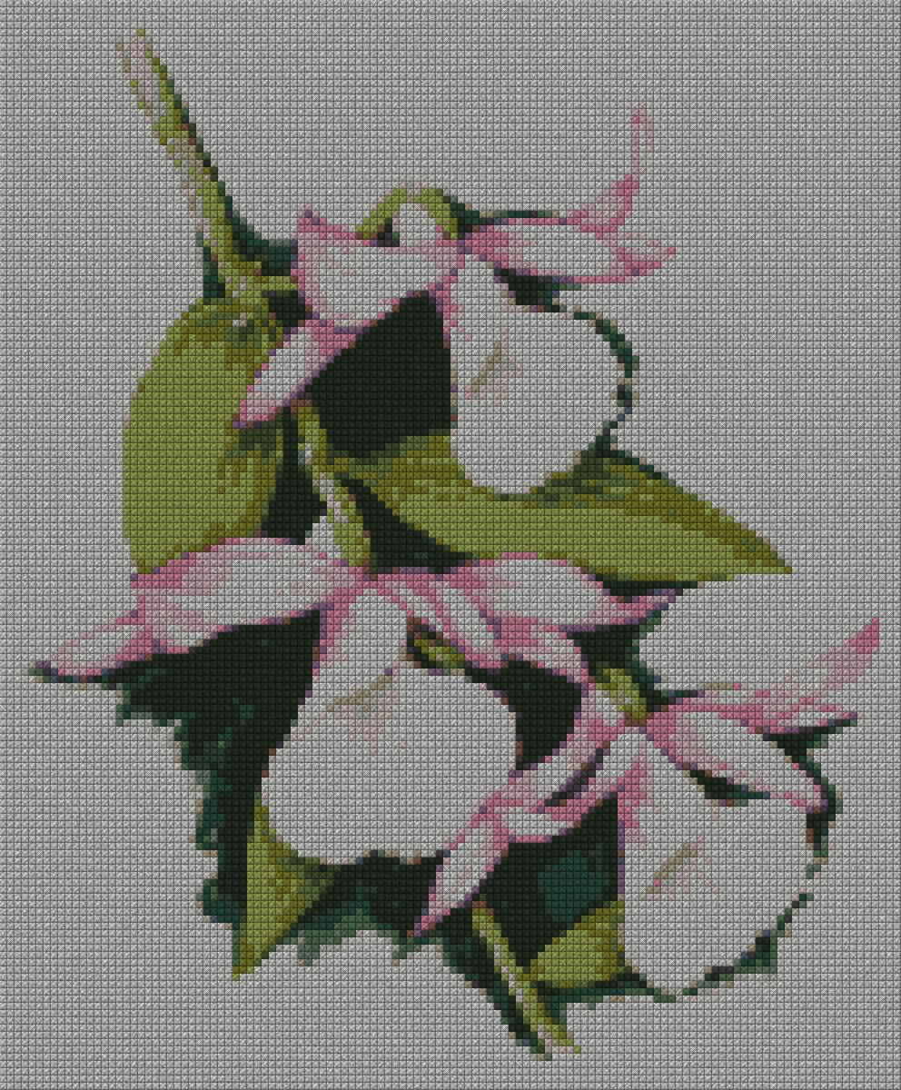 schemi_misti/fiori/orchidea03s.jpg