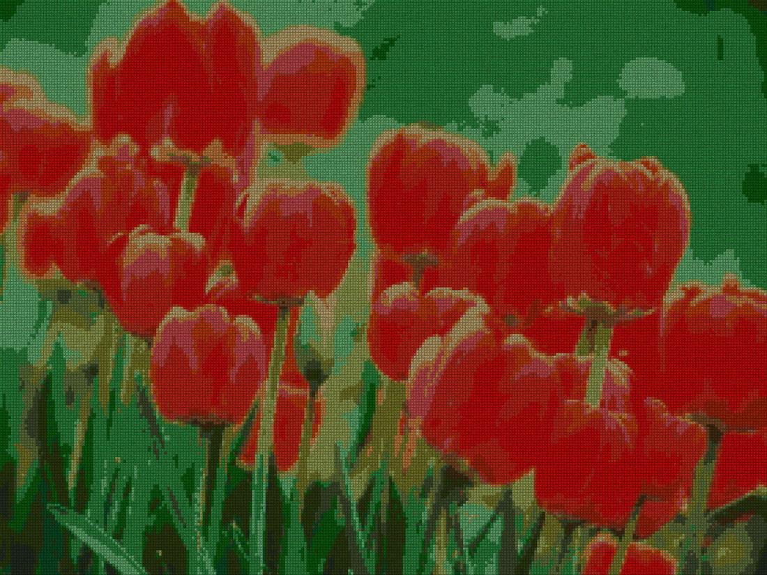 schemi_misti/fiori/papavero_papaveri_3s.jpg