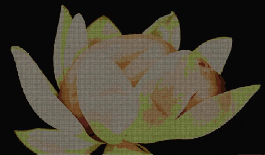 schemi_misti/fiori/saura_480x280.jpg