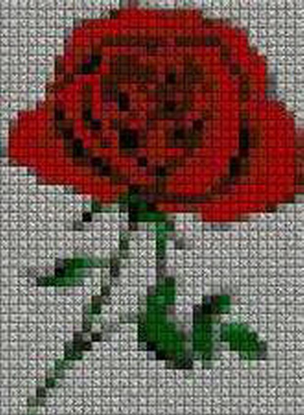schemi_misti/fiori/schemi_fiori_frutta_130.JPG