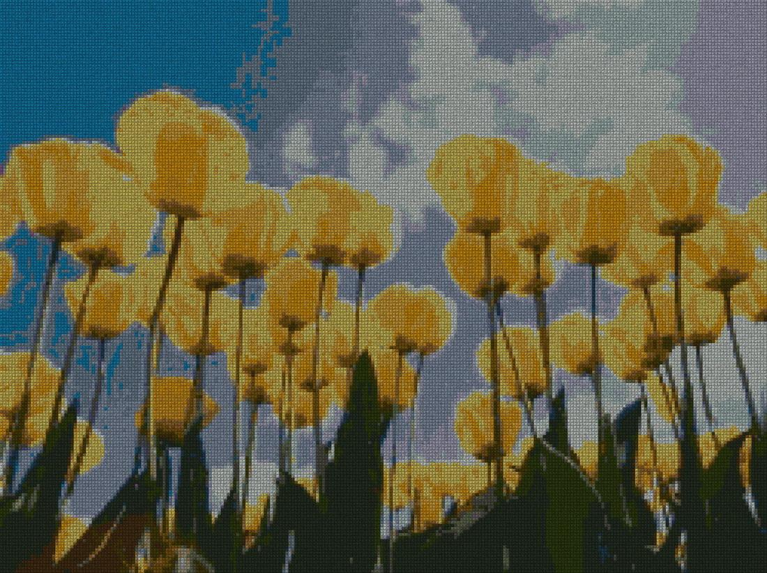 schemi_misti/fiori/tulipano_tulipani_3s.jpg