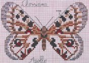 schemi_misti/animali_aria/schemi_animali_farfalle_18.jpg