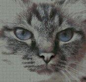 schemi_misti/animali_terra/micio_gatto_05.jpg