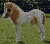 schemi_misti/animali_terra/pony200.jpg