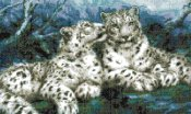 schemi_misti/animali_terra/schemi_animali_059.jpg
