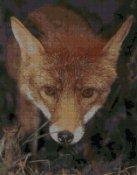 schemi_misti/animali_terra/schemi_animali_135.JPG