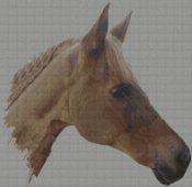schemi_misti/animali_terra2/cavallo_testa-197x192.jpg