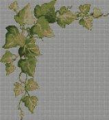 schemi_misti/cornicette/edera-cornice.jpg