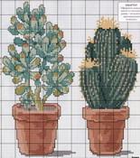 schemi_misti/fiori/cactus-3.jpg