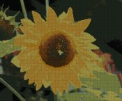 schemi_misti/fiori/girasole_210x175.jpg