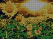 schemi_misti/fiori/girasoli2-270x202.jpg