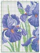 schemi_misti/fiori/iris_2.jpg