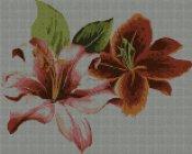 schemi_misti/fiori/orchidea-154x124.jpg