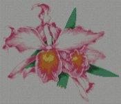 schemi_misti/fiori/orchidea02s.jpg