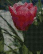 schemi_misti/fiori/schemi_fiori_frutta_084.JPG
