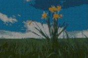 schemi_misti/fiori/schemi_fiori_frutta_088.JPG