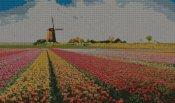 schemi_misti/fiori/tulipano_tulipani_4s.jpg