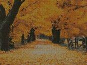 schemi_misti/misti2/autunno300.jpg